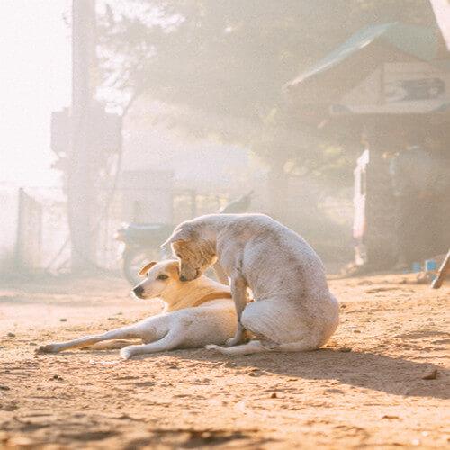 Ladrido de Perro 2
